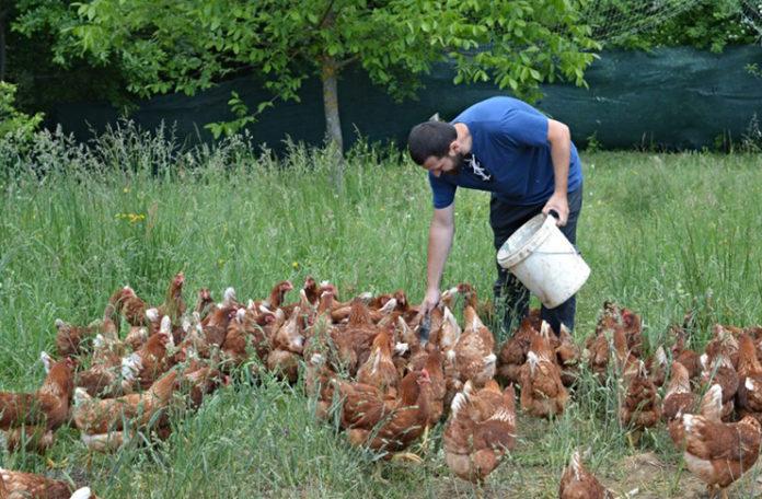 Vratio se iz Austrije i pokrenuo biznis: Ko jednom kupi jaja uvijek se vraća (FOTO)