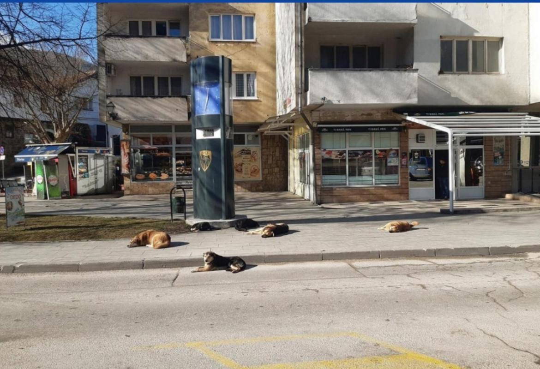 U Jajcu masovno trovanje pasa: Otrovano 28 pasa, 11 spašeno hitnom ...